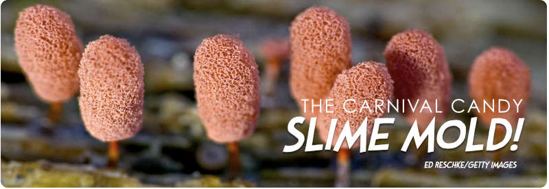 Carnival Candy Slime Mold